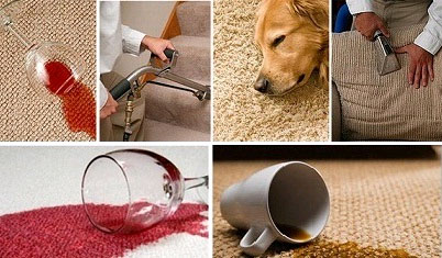 pet odor stain removal westchester